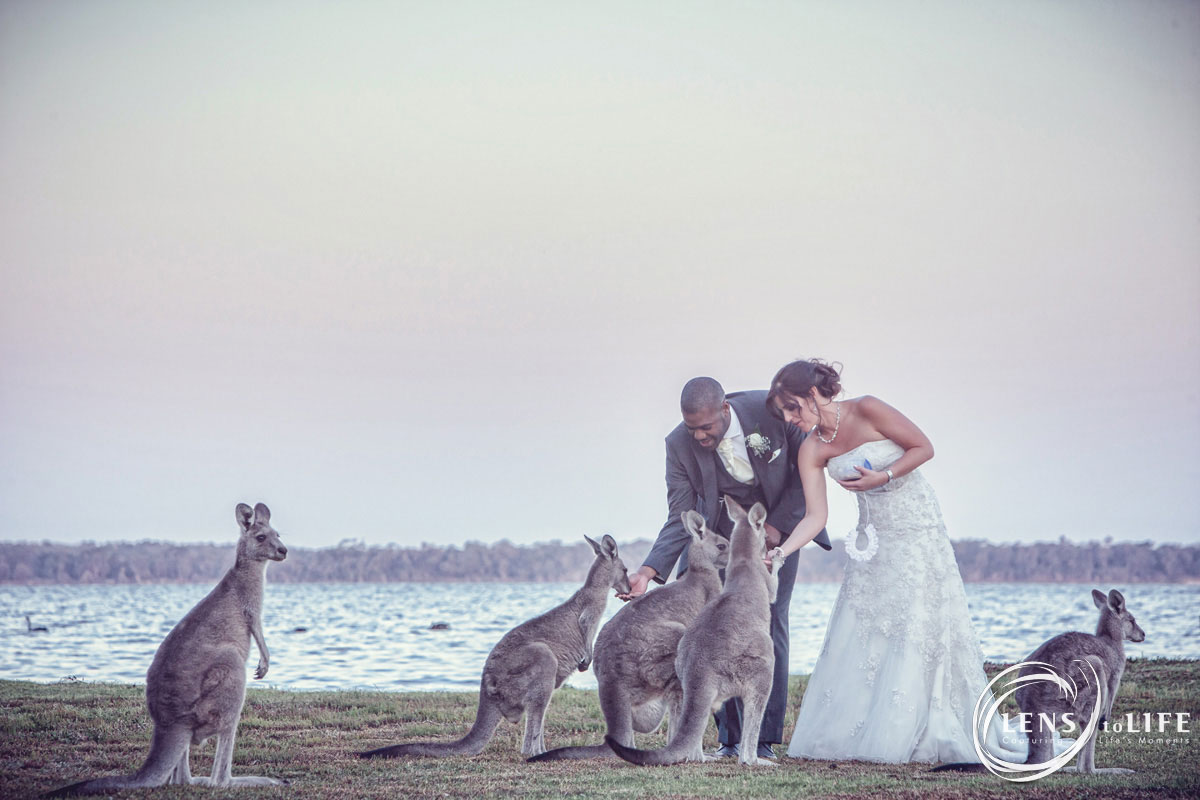 Gippsland_Wedding_Wattle_Point029